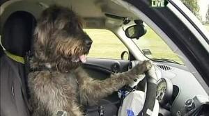 учимся водить  на механике